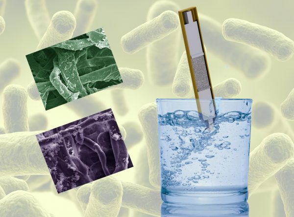 Paper strips laced with sugar could be the sweetest solution so far, literally, to kill E. coli in contaminated water.