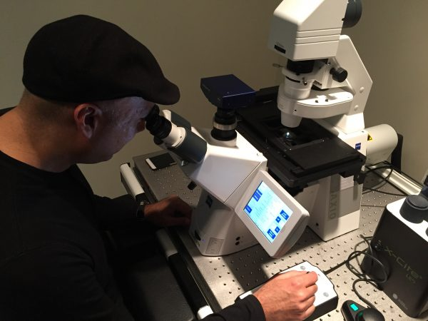 York U chemistry Professor Muhammad Yousaf looks at the 3D heart tissue cells beating together as one