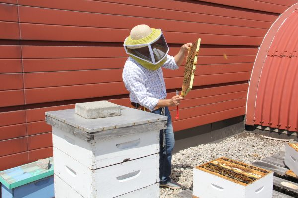 Professor Amro Zayed checking out a frame of honeybees from one of his rooftop colonies at York University