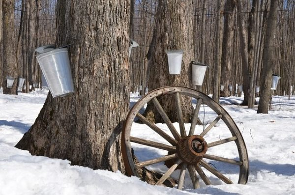 A wood ash recycling program could help save Muskoka's forests and lakes.